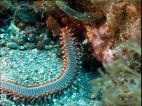 mediterranean, polychaete worm foraging. - foraging stock videos & royalty-free footage