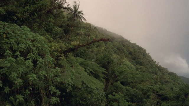 Medium angle of dense jungle on hillside. pans down along hillside to right to show more jungle.