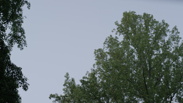 medium angle of leaves in trees.