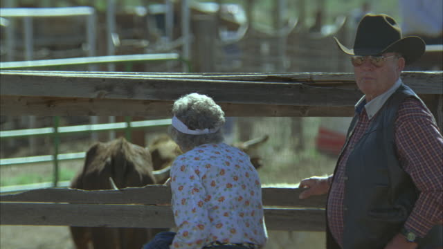 medium angle of people dressed in cowboy hats standing next to wooden fence. bull or longhorn steer behind fence. could be rodeo. - sun visor stock videos & royalty-free footage