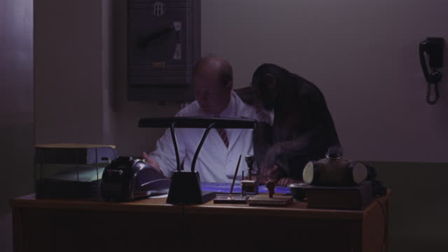 medium angle of scientist sitting at desk with chimpanzee on it. man is wearing lab coat. gas mask on desk beside him. could be reception desk at medical research facility or laboratory. scientist plays with chimp. humorous. animals.