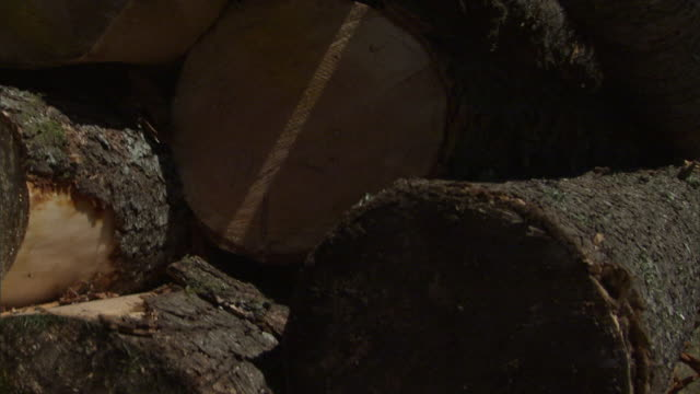 medium close up crane-the ends of logs reveal a variety of marks and cuts. / oregon, usa - lumberyard stock videos and b-roll footage