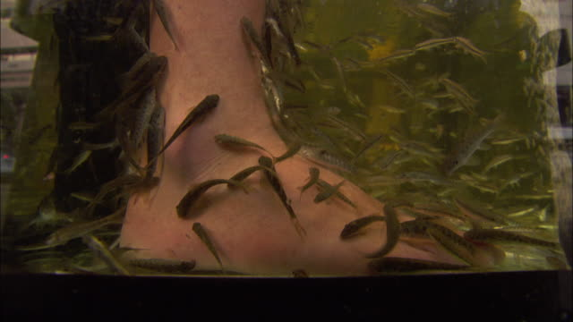 stockvideo's en b-roll-footage met medium close up hand-held - fish nibble on the feet of a pedicure patron before the feet are raised out of the water. / thailand - pedicure