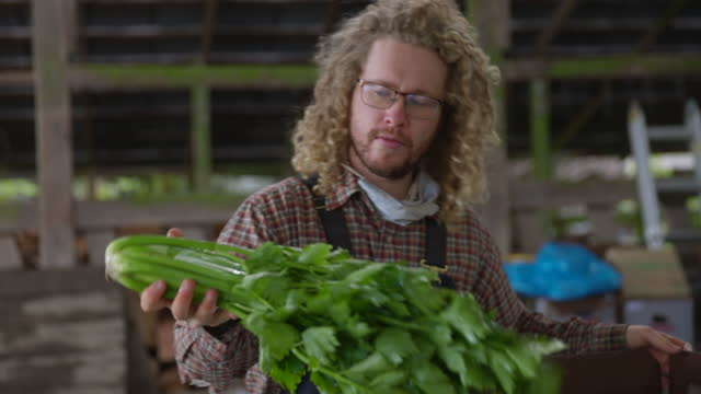medium close up shot of farmer filling csa box with fresh organic vegetables on farm - carrying stock videos & royalty-free footage