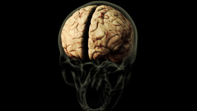 medium close up static - a three-dimensional model of a human brain highlights the cerebellum in a computer-generated animation. - human brain stock videos & royalty-free footage