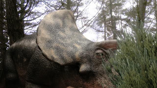 vídeos de stock, filmes e b-roll de medium close up static - a triceratops feeds on plants in a computer-generated animation. / denver, colorado, usa - jurássico