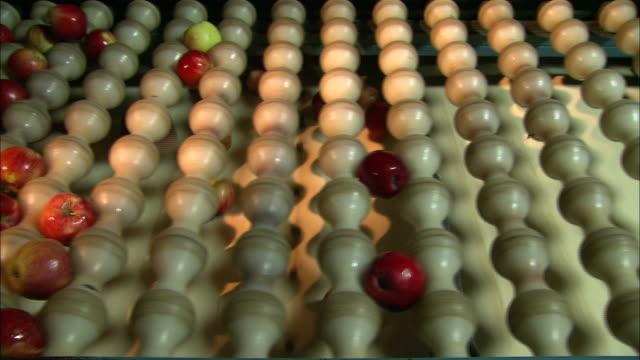 medium close up static - apples drop through a sizing device onto a conveyor /  missouri, united states - karamell stock-videos und b-roll-filmmaterial