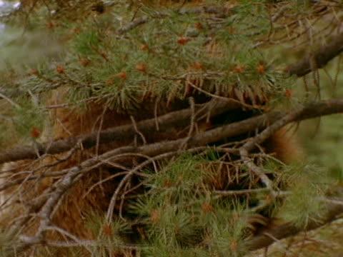 medium close up - pinaceae stock videos & royalty-free footage