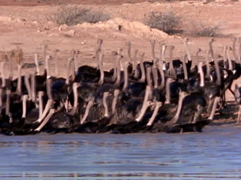 vidéos et rushes de medium close up - medium group of animals
