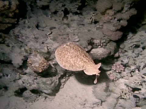 medium close up - electric ray stock videos & royalty-free footage