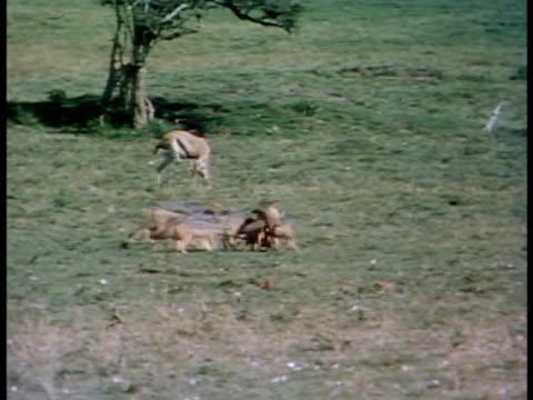 vídeos y material grabado en eventos de stock de medium close up - oreja animal