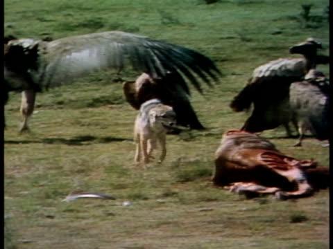 medium close up - 死んでいる動物点の映像素材/bロール