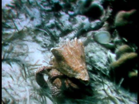 medium close up - aquatic organism stock videos & royalty-free footage