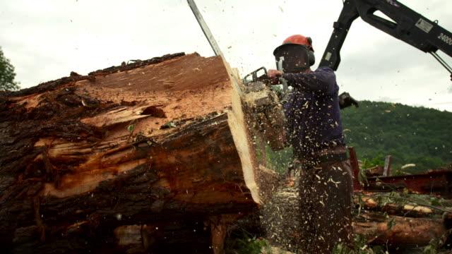 vídeos de stock, filmes e b-roll de medium full shot of man sawing a log. - forester