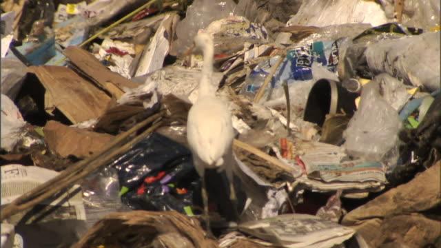 medium hand-held - a bird walks over trash at a landfill / bakersfield, california - ゴミ捨て場点の映像素材/bロール