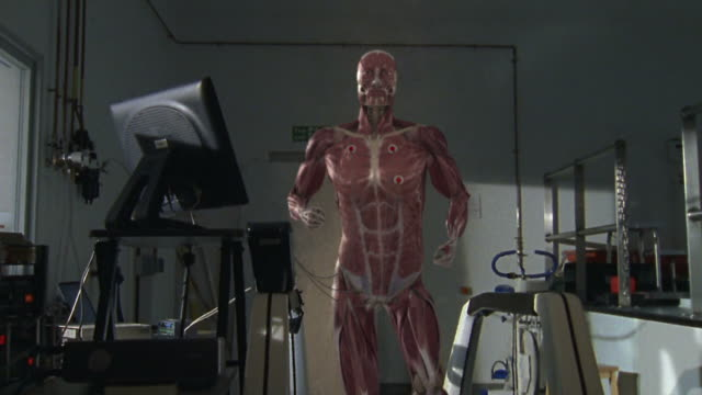 Medium hand-held - A computer animation depicts the muscular system of a human running on a treadmill