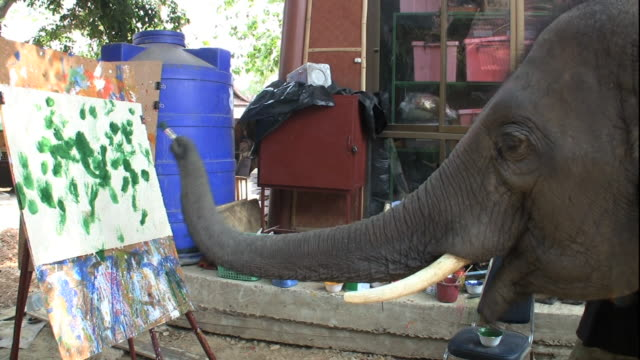 stockvideo's en b-roll-footage met medium hand-held - an elephant uses its trunk to paint a picture. / thailand - schilderijen