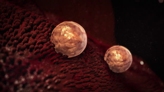 medium hand-held - fluid washes white blood cells away from biological tissue in a computer-generated animation. - 白血球点の映像素材/bロール