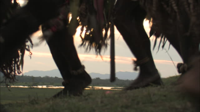 medium hand-held - natives in grass skirts perform a welcome dance in papua new guinea. / papua new guinea - papua stock videos and b-roll footage