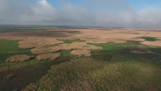 Medium hight over swamp with no trees - Drone Aerial 4K Everglades, Swamp bayou with wildlife alligator nesting Ibis, Anhinga, Cormorant, Snowy Egret, Spoonbill, Blue Heron, eagle, hawk, cypress tree 4K Nature/Wildlife/Weather