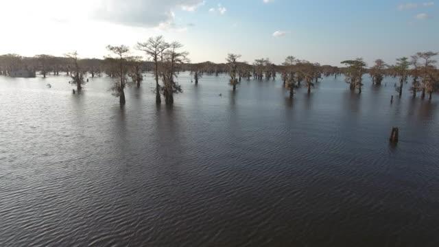 Medium hight through cypress trees in swamp - Drone Aerial 4K Everglades, Swamp bayou with wildlife alligator nesting Ibis, Anhinga, Cormorant, Snowy Egret, Spoonbill, Blue Heron, eagle, hawk, cypress tree - Drone Aerial View