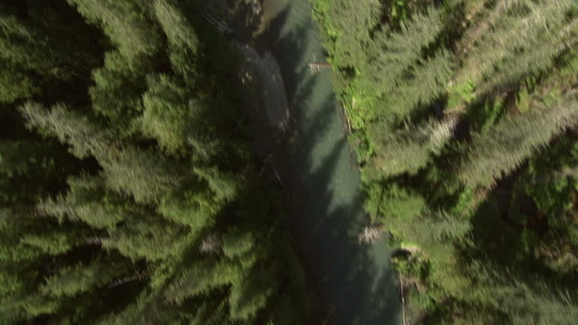 """Medium Long Shot aerial push-in-Tall evergreens tower over a scenic river in the Alaskan wilderness. / Alaska, USA"""