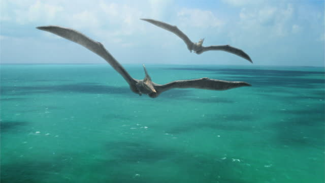 Medium Long Shot aerial push-out - A Pterosaur circles above another Pterosaur over a sea in a computer-generated animation. / Denver, Colorado, USA
