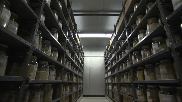medium long shot crane push-out-jars of corn fill shelves in a storeroom. / usa - jar stock videos & royalty-free footage