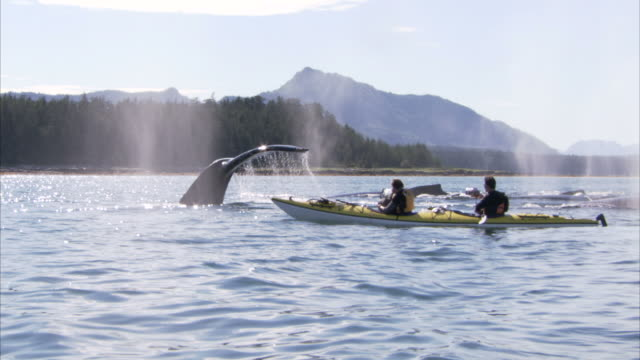 """medium long shot hand-held-whales breach the ocean next to two men in a kayak. / alaska, usa"" - whale stock videos & royalty-free footage"