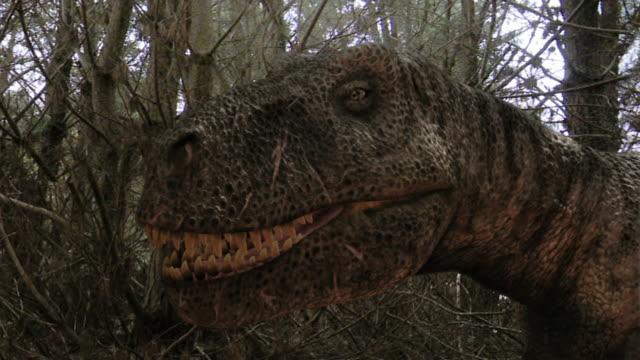 medium long shot pan-left - a tyrannosaurus rex lurks near a triceratops in a computer-generated animation. / denver, colorado, usa - tyrannosaurus rex stock videos and b-roll footage