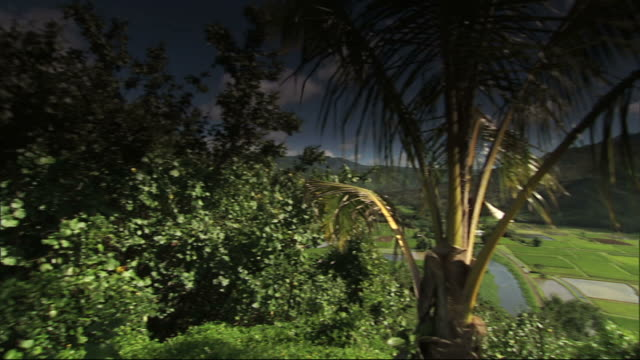 medium long shot pan-right - a palm tree and lush vegetation grow near green crops in a valley. / honolulu, hawaii, usa - isole del pacifico video stock e b–roll