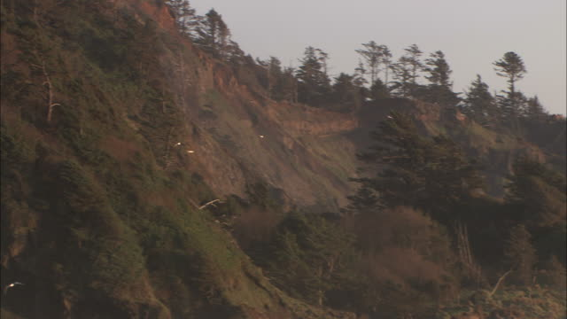 medium long shot pan-right - seagulls fly over an eroded coastal hill as waves break against rock formations close to shore/oregon - oregon coast stock videos & royalty-free footage
