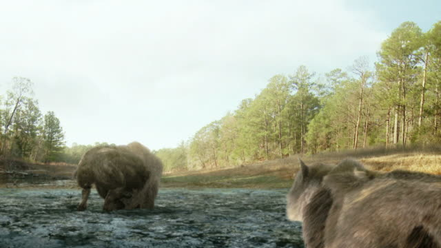 medium long shot push-in - a buffalo struggles in mud near stalking predators in a computer-generated animation. / los angeles, california, usa - jura bildbanksvideor och videomaterial från bakom kulisserna