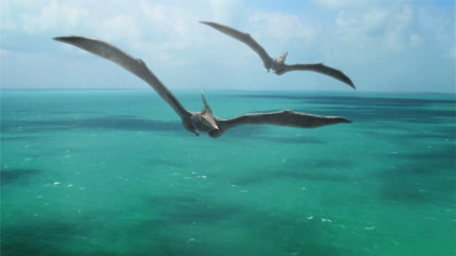 medium long shot push-out - pterosaurs soar above a sea in a computer-generated animation. / denver, colorado, usa - dinosaur stock videos & royalty-free footage