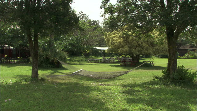 medium long shot static - a hammock stretches between two trees/hawaii, usa - lawn stock videos & royalty-free footage