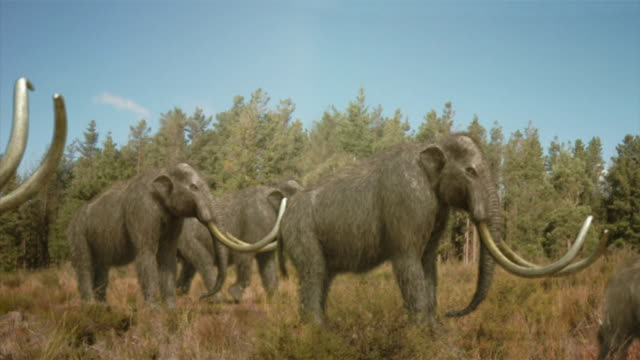 vidéos et rushes de medium long shot static - a mastodon herd grazes in a field near a forest in a computer-generated animation. / denver, colorado, usa - mammifère