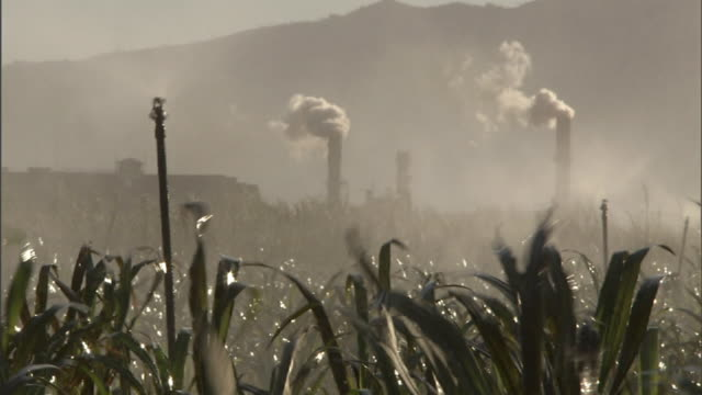 medium long shot static - sprinklers spray a sugarcane field near a sugarcane factory on hawaii's maui island. / hawaii, usa - agricultural equipment stock videos & royalty-free footage