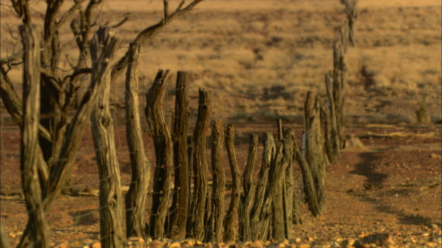 Medium Long Shot static - Tree branches in a line form a fence in a desert / Simpson Desert, Australia