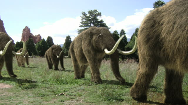 Medium Long Shot static - Woolly mammoths march across a field then slowly disappear. /