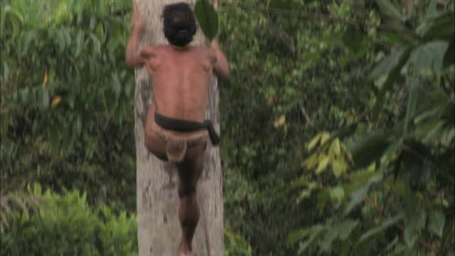 stockvideo's en b-roll-footage met medium long shot tilt-up - a native uses a loop of rope to climb a massive tree. / indonesia - oost aziatische cultuur