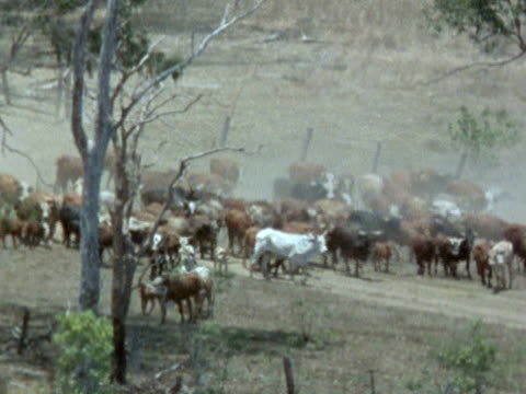 medium long shot - cattle drive stock videos & royalty-free footage