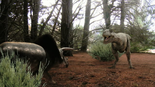 medium long shot zoom-in zoom-out - a tyrannosaurus rex and a triceratops fight in a computer-generated animation. / denver, colorado, usa - tyrannosaurus rex stock videos and b-roll footage