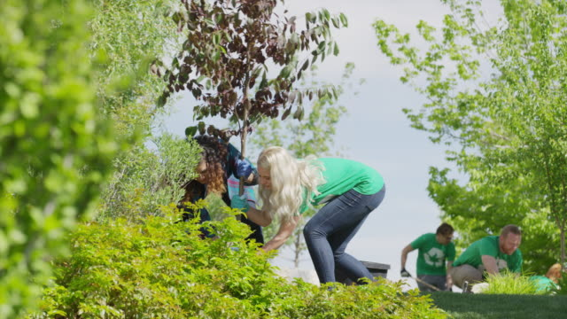 Medium low angle view of volunteers planting tree / Cedar Hills, Utah, United States
