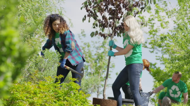 medium low angle view of volunteers planting tree / cedar hills, utah, united states - planting stock videos & royalty-free footage