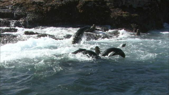 vídeos y material grabado en eventos de stock de medium pan-left pan-right - seals play in the surf near a rocky island / south africa - perspectiva desde una barca