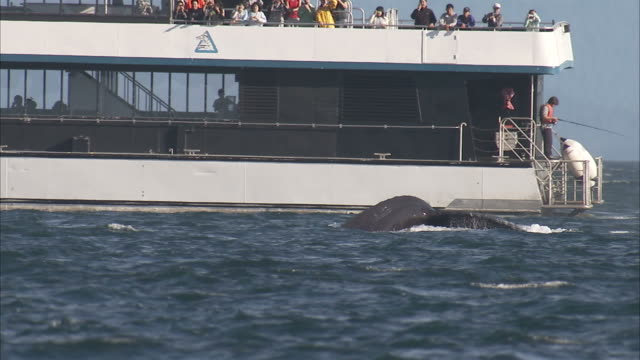 """medium pan-left-a whale surfaces then dives near a tourist boat in alaska. / alaska, usa"" - whale watching stock videos and b-roll footage"