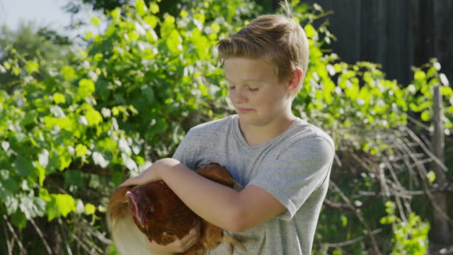 medium panning shot of boy holding chicken / springville, utah, united states - springville utah stock-videos und b-roll-filmmaterial