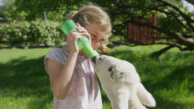 medium panning shot of girl feeding bottle to lamb / springville, utah, united states - springville utah stock-videos und b-roll-filmmaterial
