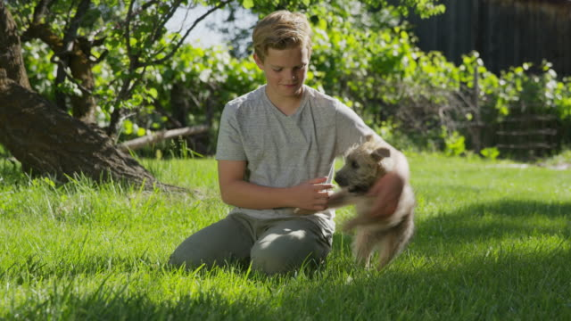 medium panning shot of kneeling boy playing with dog in field / springville, utah, united states - springville utah stock-videos und b-roll-filmmaterial