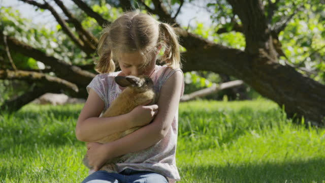 medium panning shot of kneeling girl hugging rabbit in field / springville, utah, united states - springville utah stock-videos und b-roll-filmmaterial